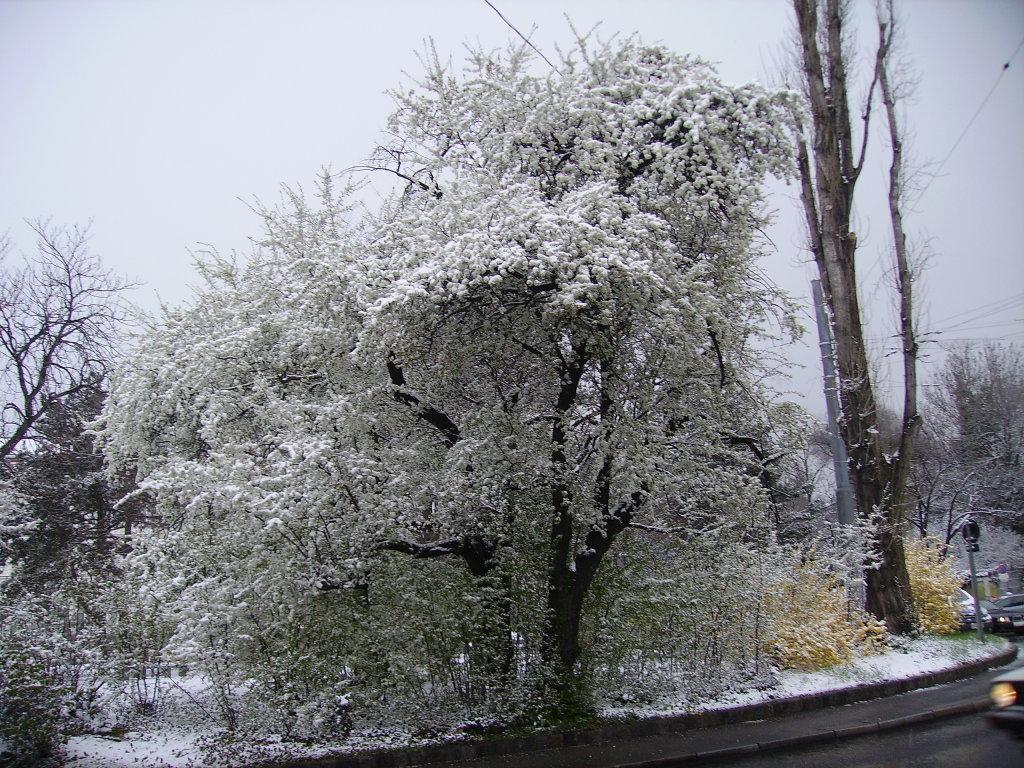 Schneezauber, aufgenommen am 19.Dezember 2009 im Wienerwald im 16ten Bezirk, nahe der Jubiläumswarte - 16. Bezirk, Ottakring, Wien (1160-W)