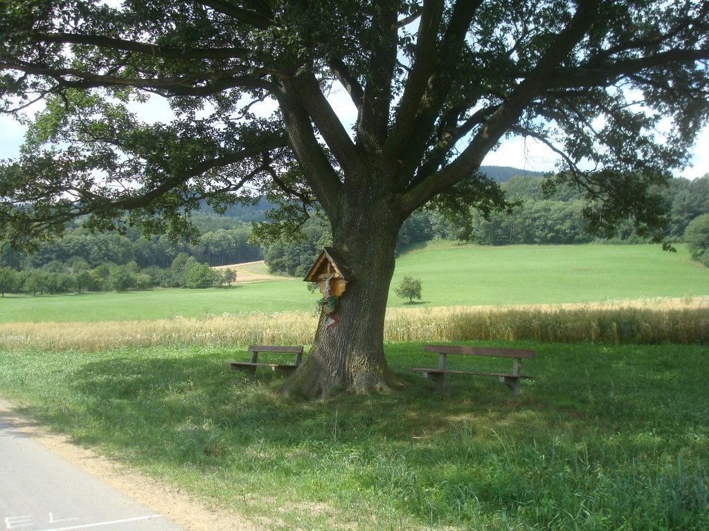 Bildbaum bei Laimbach am Ostrong - Laimbach am Ostrong, Niederösterreich (3663-NOE)