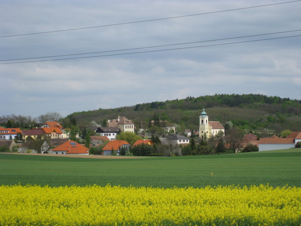 Roggendorfer HEURIGE, Veranstaltungen, Sport und NEWS - Roggendorf, Niederösterreich (3730-NOE)