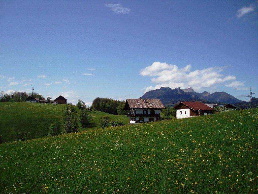 Blick auf den höchsten Punkt Windhags - Windhag, Oberösterreich (5351-OOE)