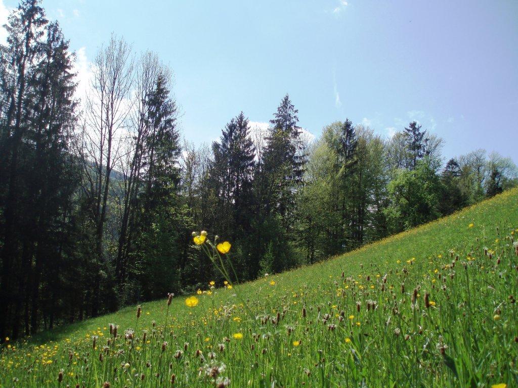 Waldrand - Windhag, Oberösterreich (5351-OOE)