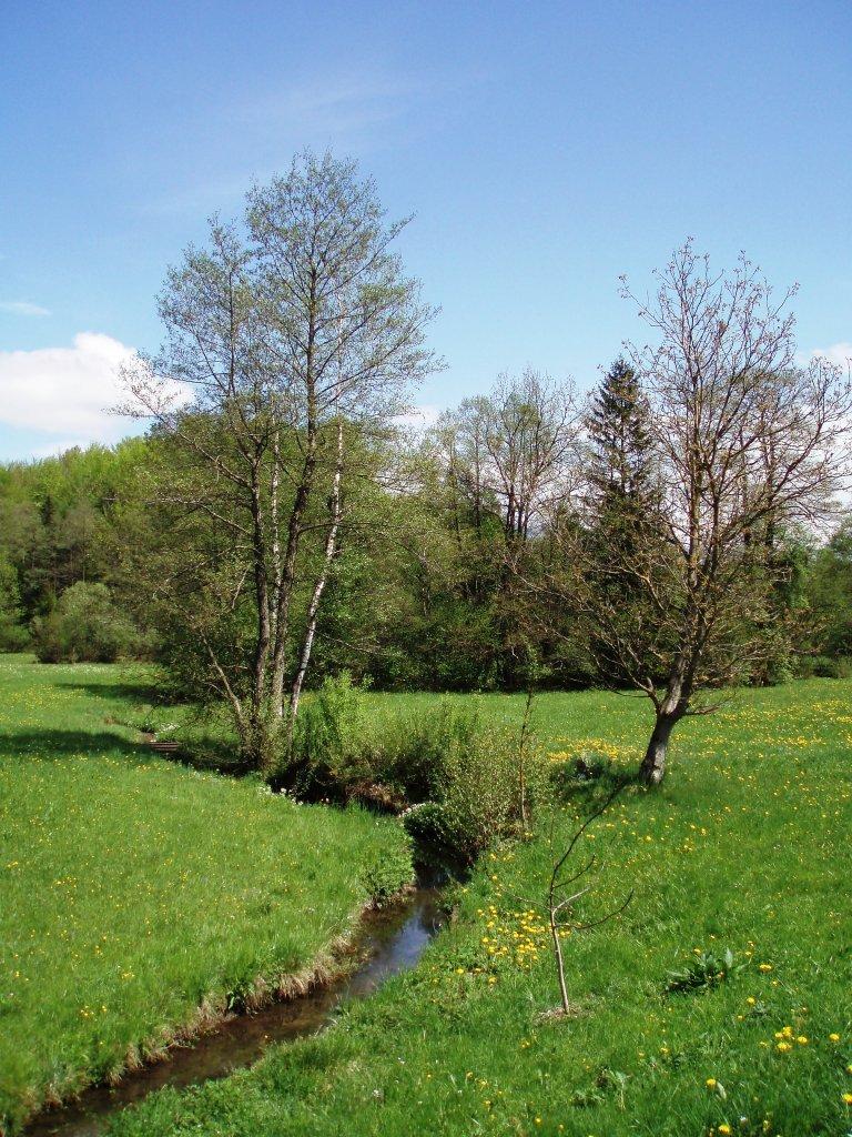 .. entlang des kleinen Baches - Windhag, Oberösterreich (5351-OOE)