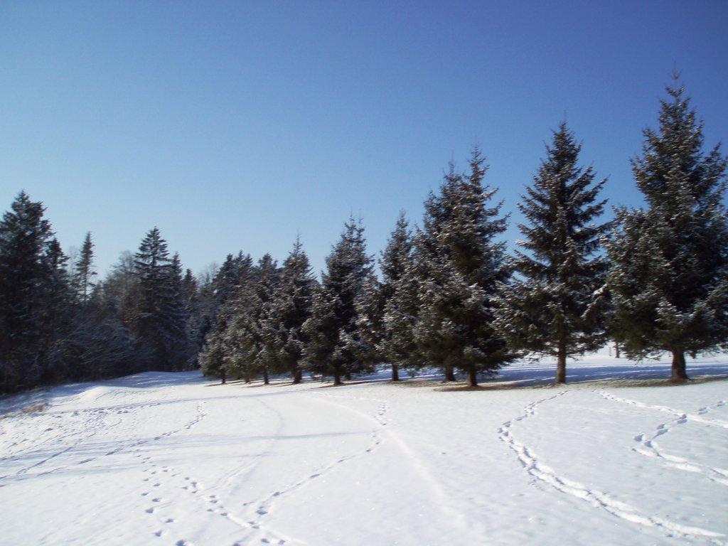 ... entlang eines kleinen Flusses - Windhag, Oberösterreich (5351-OOE)