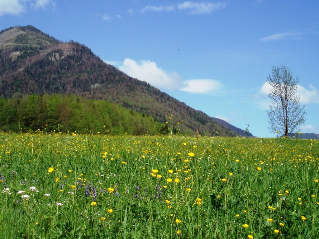 Blick auf den Gartenzinken - Windhag, Oberösterreich (5351-OOE)