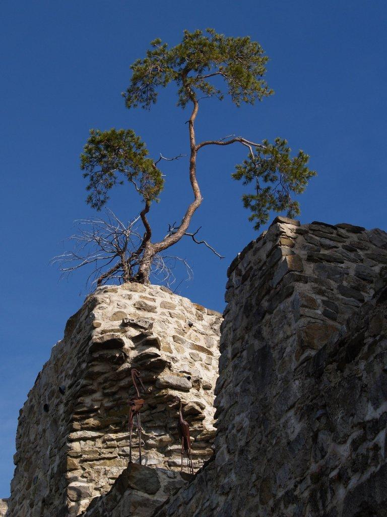 Burgarena Reinsberg - ein anderer Blickwinkel - Reinsberg, Niederösterreich (3264-NOE)