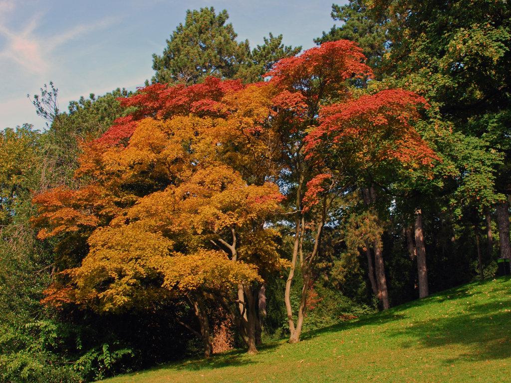 Herbst im Türkenschanzpark - 18. Bezirk, Währing, Wien (1180-W)