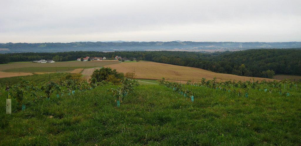 Blick vom Hochkogel Richtung Osten am 6.10.2011 - Am Hochkogel, Burgenland (7562-BGL)