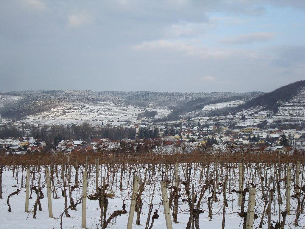Fernblick zum Weinort Zöbing - Zöbing, Niederösterreich (3550-NOE)
