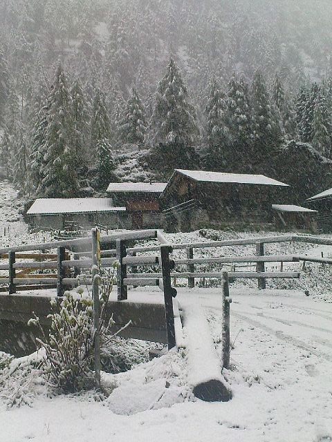 Die Landeckalmen in Matrei in Osttirol. - Landeckalm, Tirol (9971-TIR)