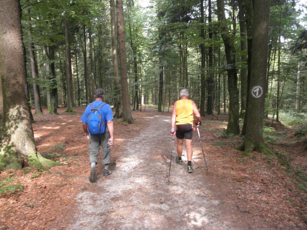 Wanderung, Mistlberg - Mistlberg, Oberösterreich (4154-OOE)