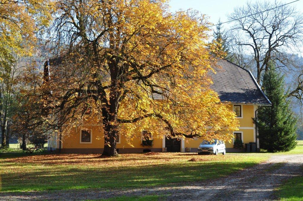 Bauernhaus hinter Kastanienbaum - Spitzwiesen, Kärnten (9571-KTN)