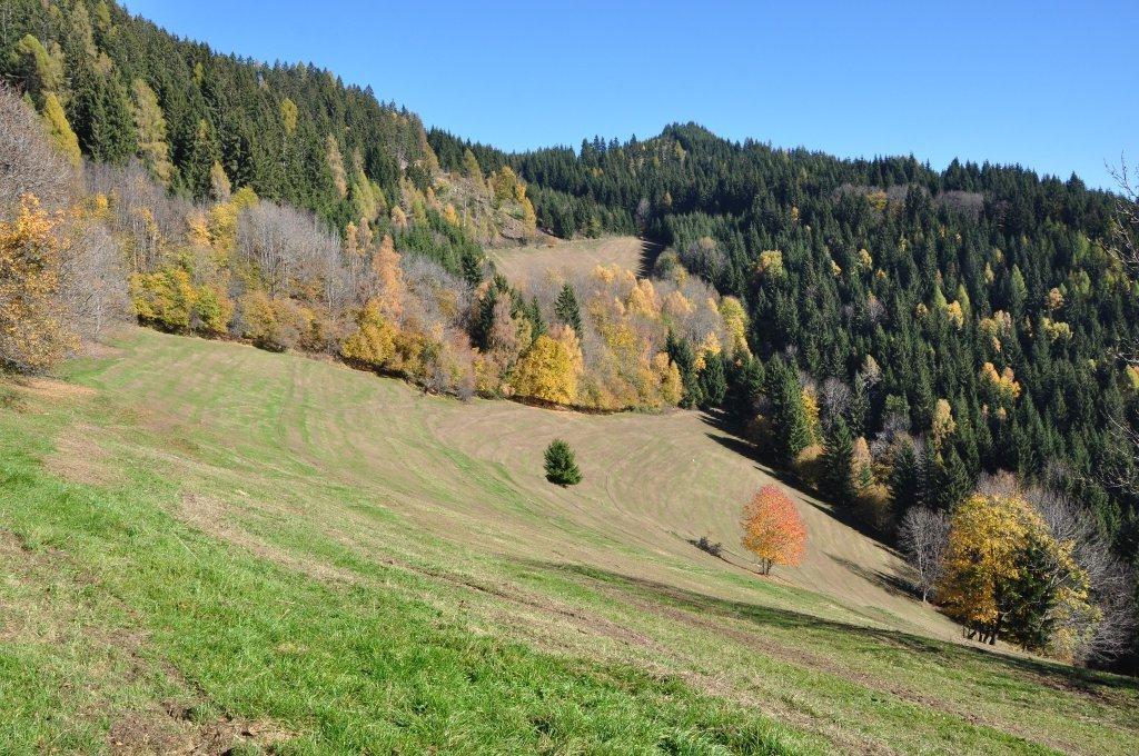Berglandschaft mit Almwiesen in Höllein - Höllein, Kärnten (9341-KTN)