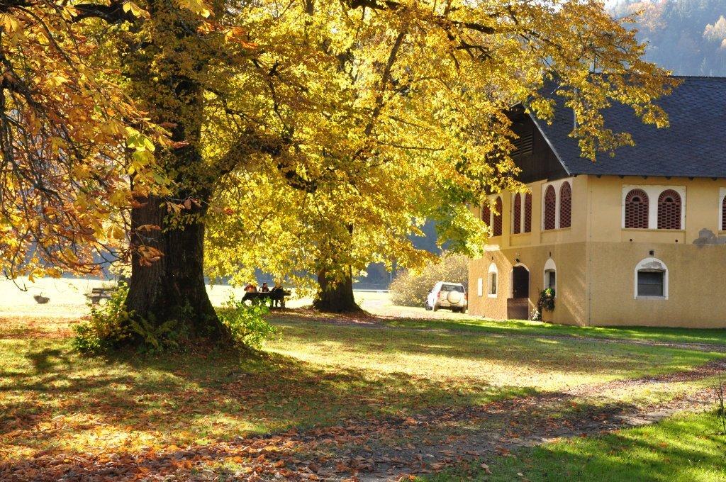 Herbststimmung unter Linden am Wirtschaftsgebäude - Spitzwiesen, Kärnten (9571-KTN)