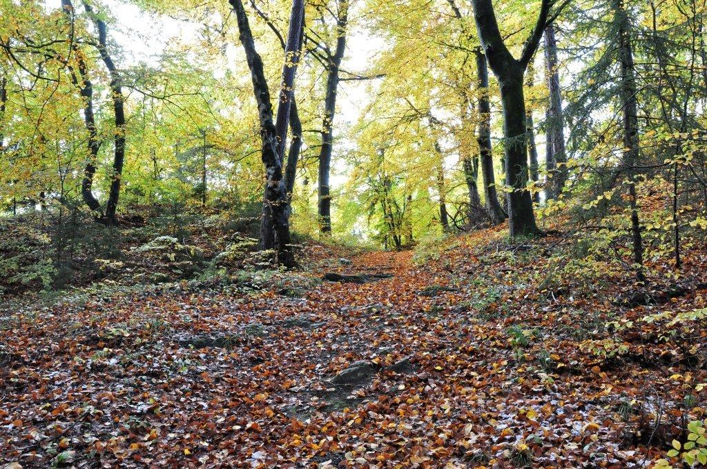 Waldweg zur niederen Gloriette - Pörtschach am Wörther See, Kärnten (9210-KTN)