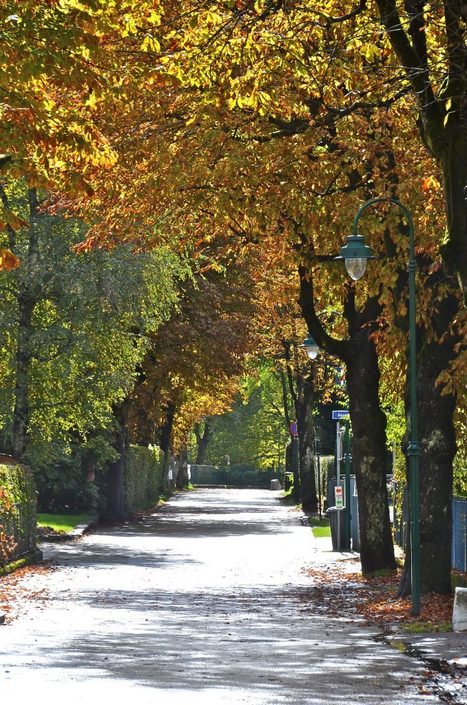 Elisabethstraße im Herbstkleid. - Elisabethstraße, Kärnten (9210-KTN)