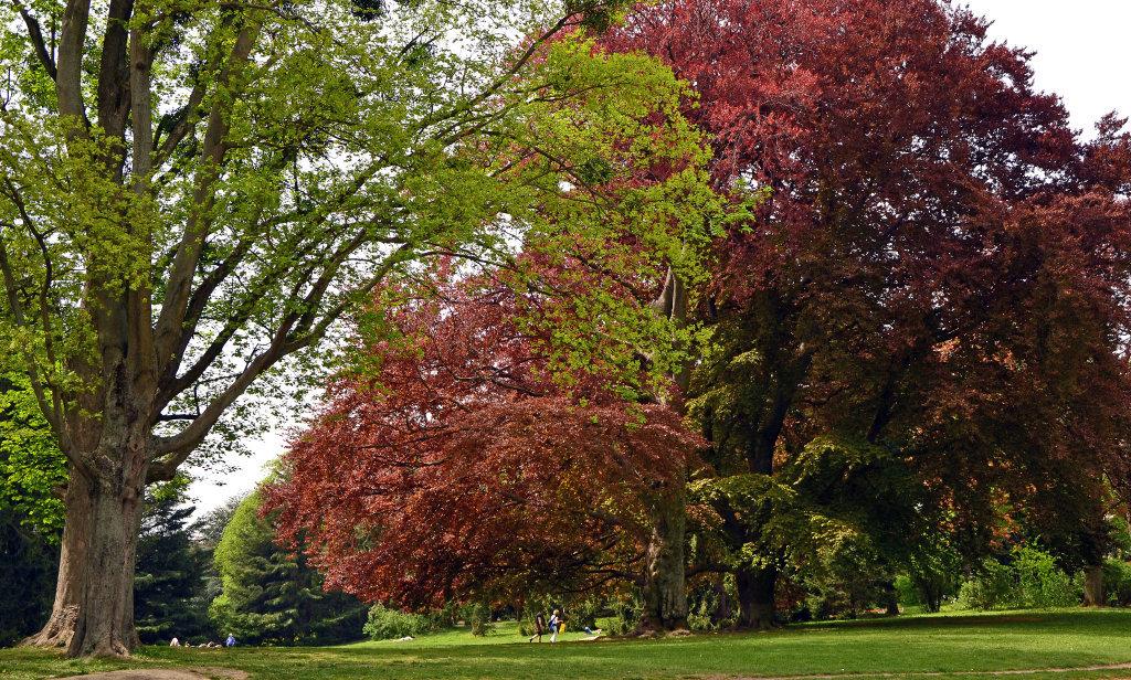 Liegewiese im Türkenschanzpark - Türkenschanzpark, Wien (1180-W)