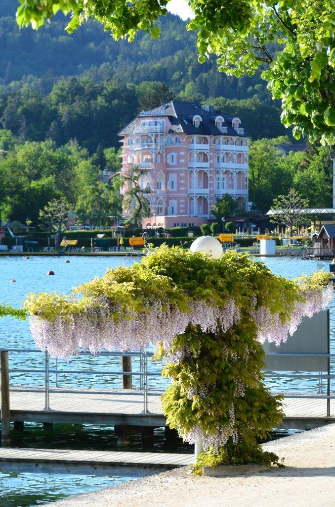 Glyzinien am Blumenstrand mit dem Hotel Astoria im Hintergrund - Blumenstrand, Kärnten (9210-KTN)