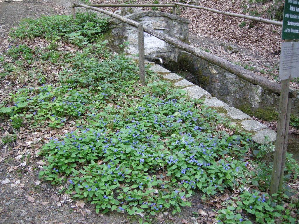 Die Melaniequelle bei St.Radegund - St. Radegund bei Graz, Steiermark (8061-STM)