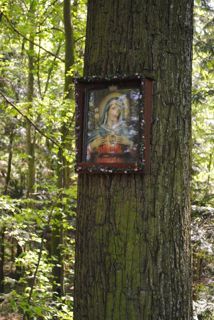 """Bildbaum """"Teufel im Schallgraben"""" - St. Michael am Bruckbach, Niederösterreich (3352-NOE)"""
