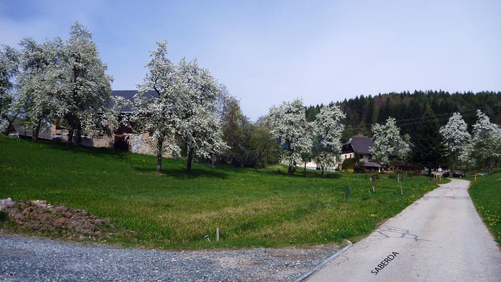 Saberda - Bäume blühen schon anfangs April - Saberda, Kärnten (9161-KTN)